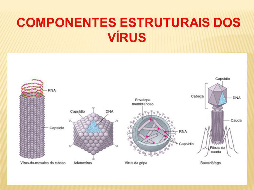COMPONENTES ESTRUTURAIS DOS VÍRUS