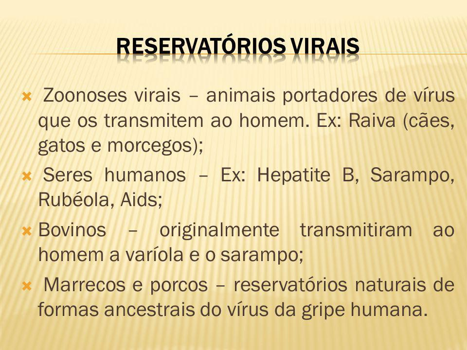 RESERVATÓRIOS VIRAIS Zoonoses virais – animais portadores de vírus que os transmitem ao homem. Ex: Raiva (cães, gatos e morcegos);