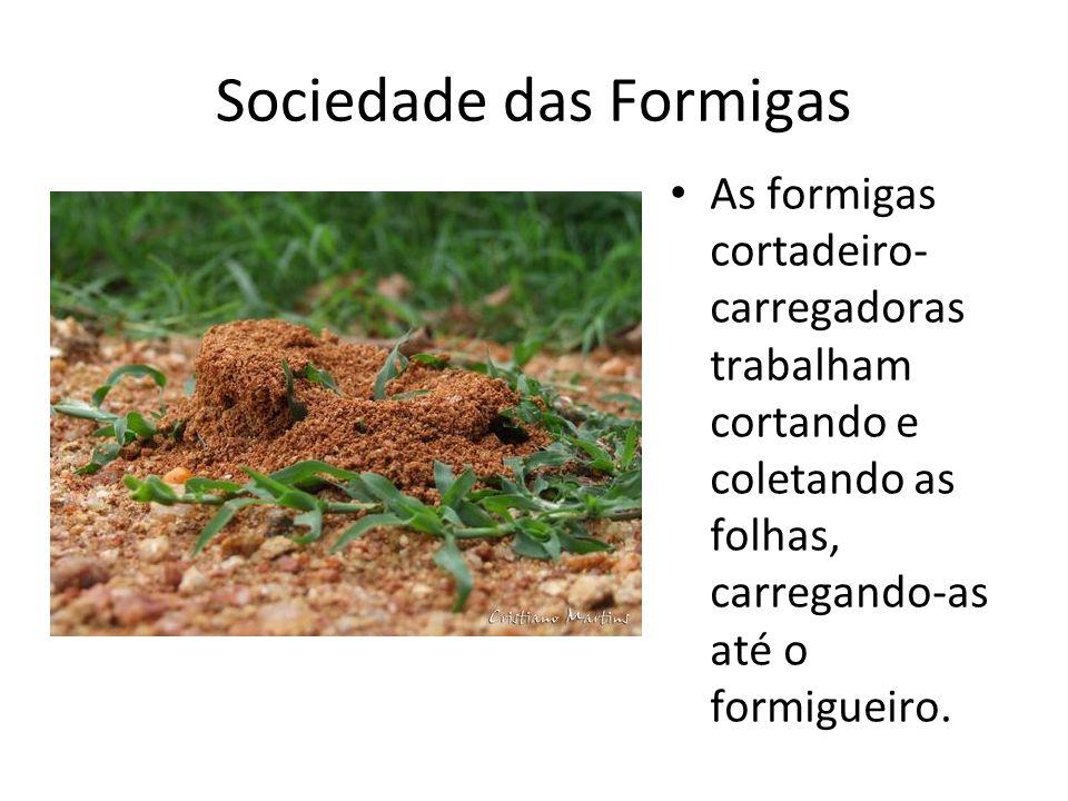 Sociedade das Formigas