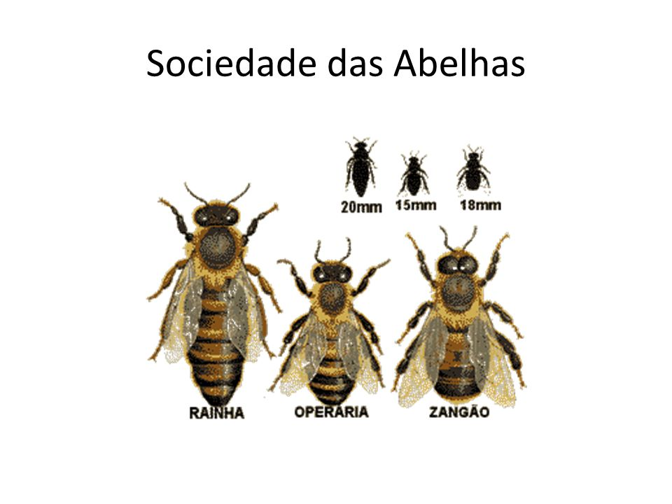 Sociedade das Abelhas