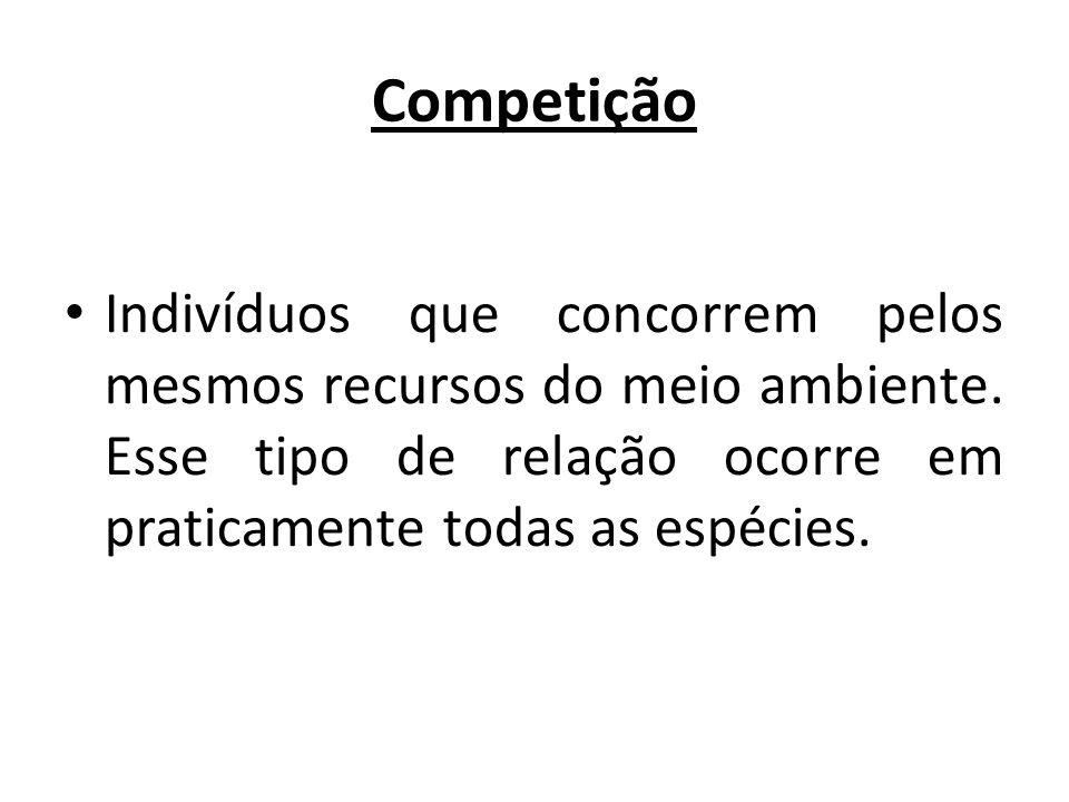 Competição Indivíduos que concorrem pelos mesmos recursos do meio ambiente.