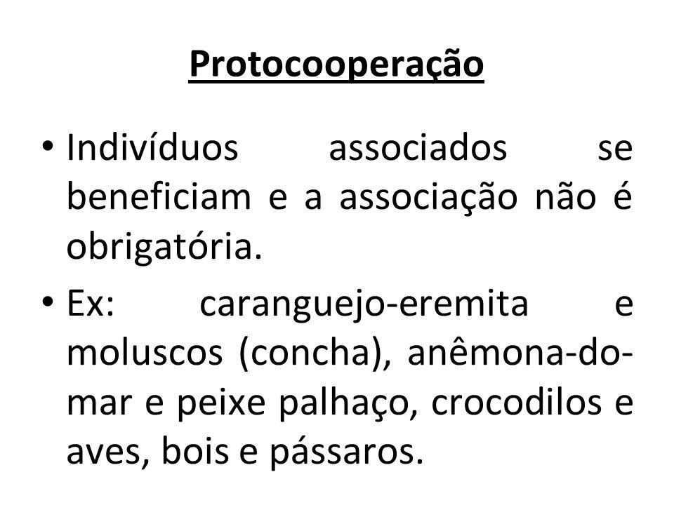 Protocooperação Indivíduos associados se beneficiam e a associação não é obrigatória.