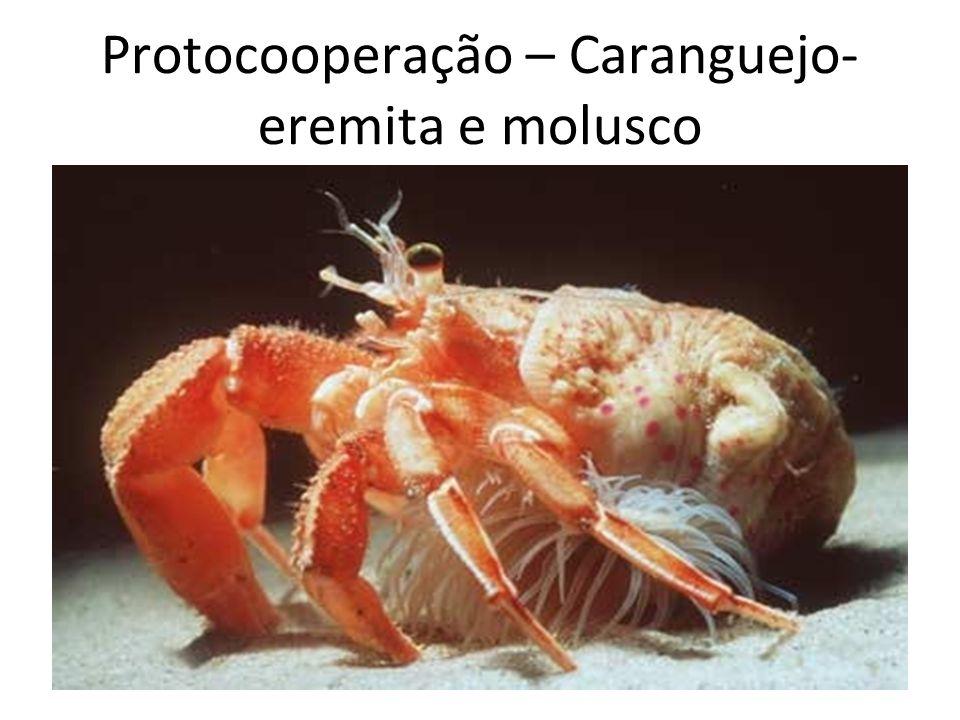 Protocooperação – Caranguejo-eremita e molusco