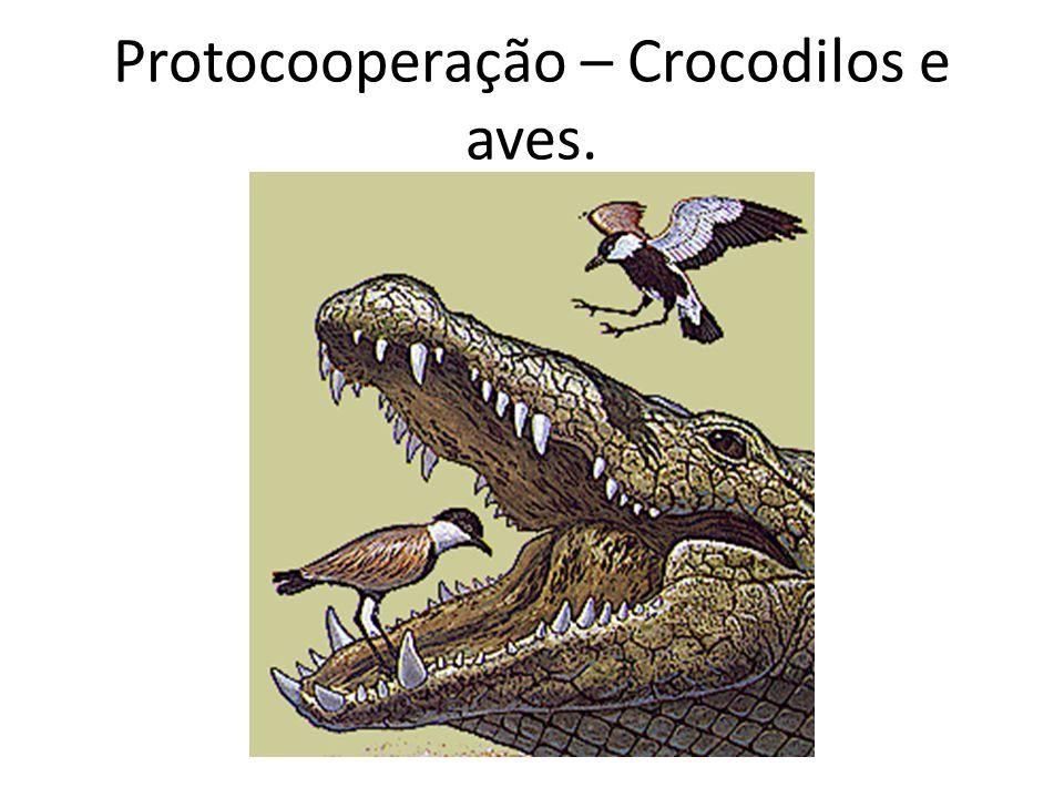 Protocooperação – Crocodilos e aves.