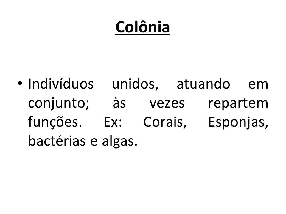 Colônia Indivíduos unidos, atuando em conjunto; às vezes repartem funções.