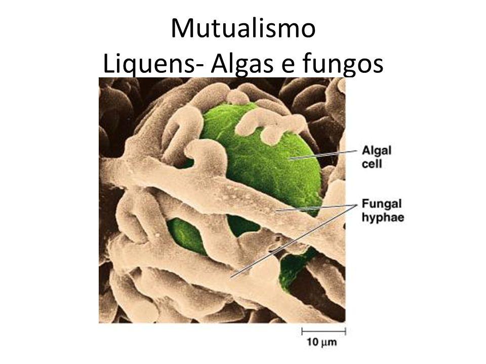 Liquens- Algas e fungos