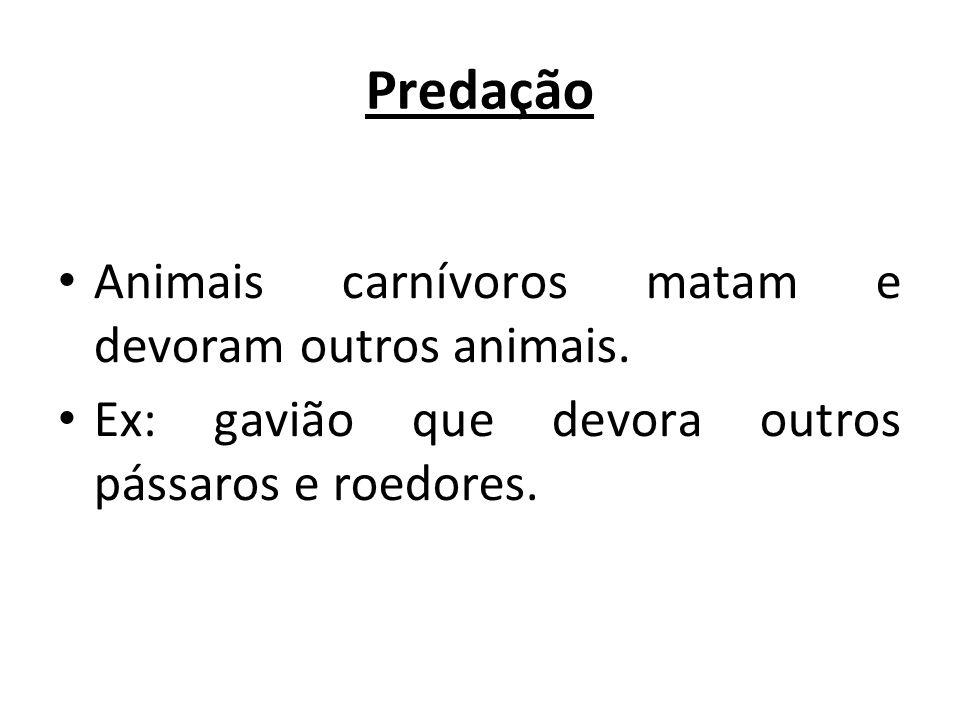 Predação Animais carnívoros matam e devoram outros animais.