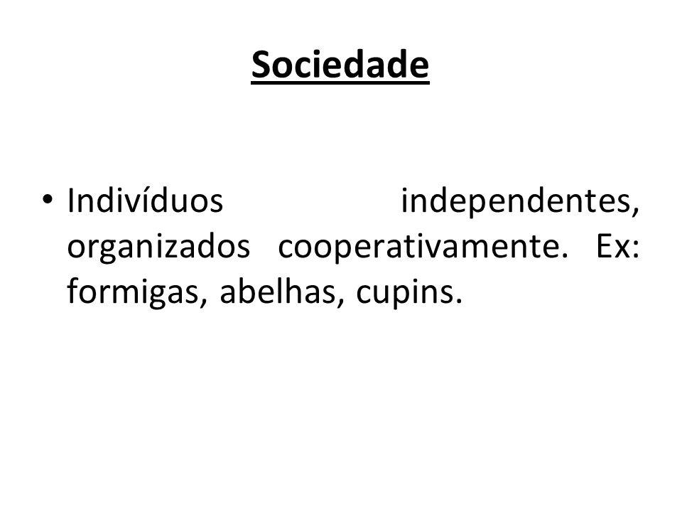 Sociedade Indivíduos independentes, organizados cooperativamente. Ex: formigas, abelhas, cupins.