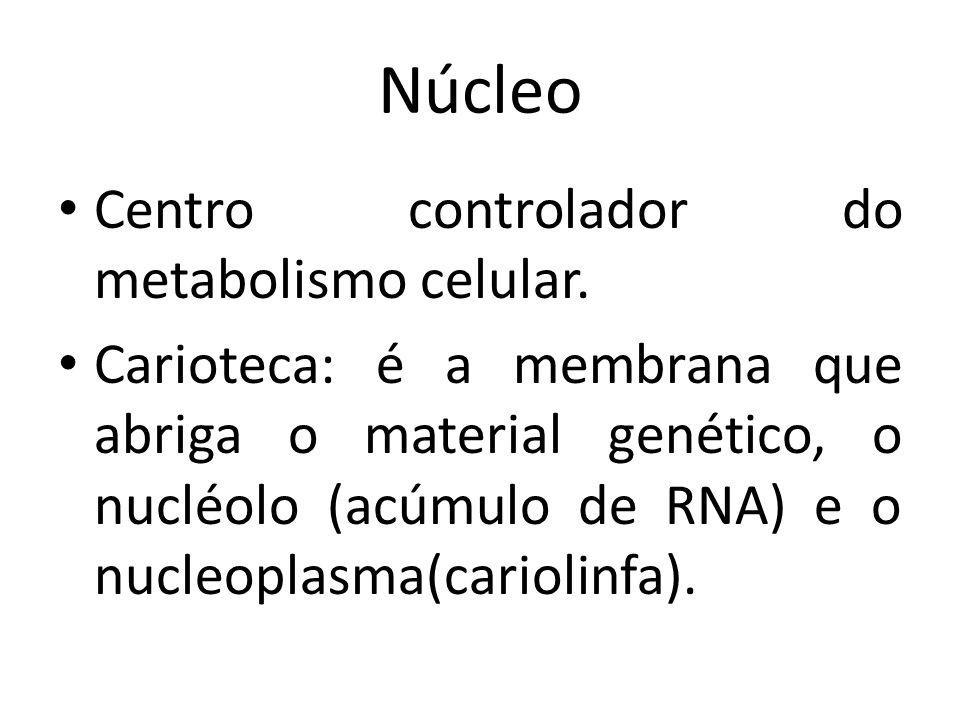 Núcleo Centro controlador do metabolismo celular.