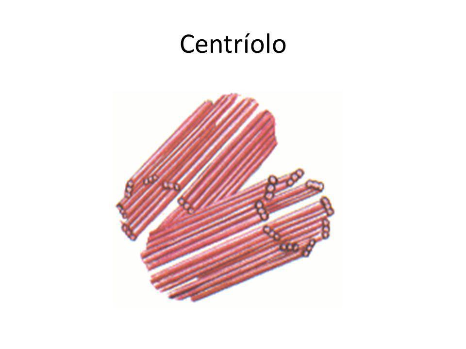 Centríolo