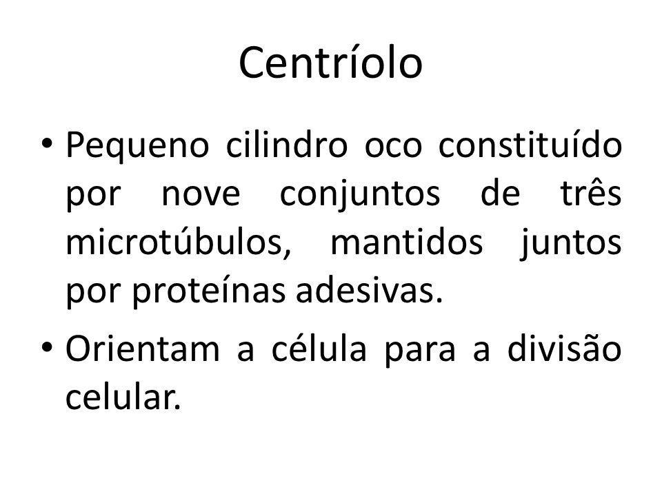 Centríolo Pequeno cilindro oco constituído por nove conjuntos de três microtúbulos, mantidos juntos por proteínas adesivas.