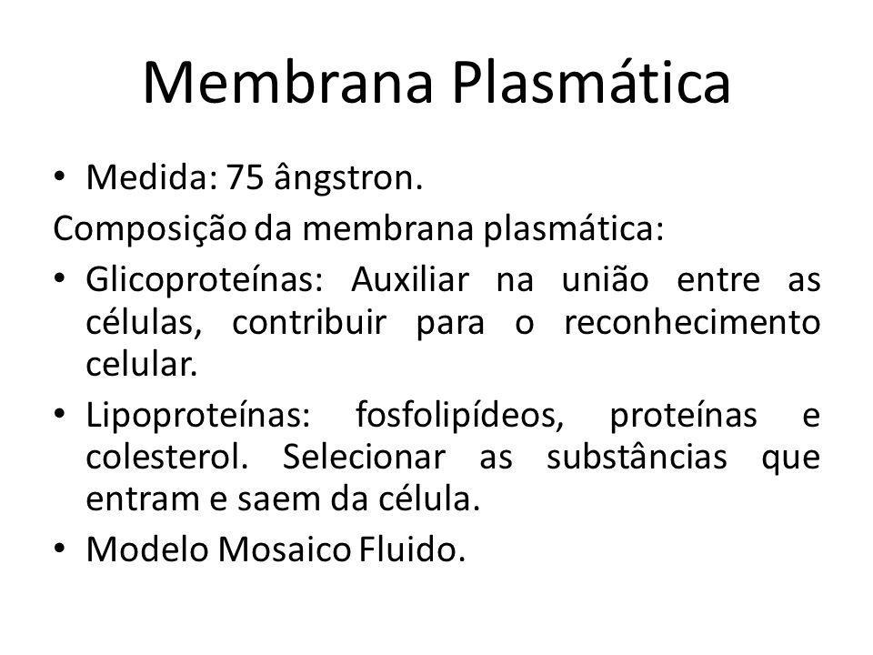 Membrana Plasmática Medida: 75 ângstron.