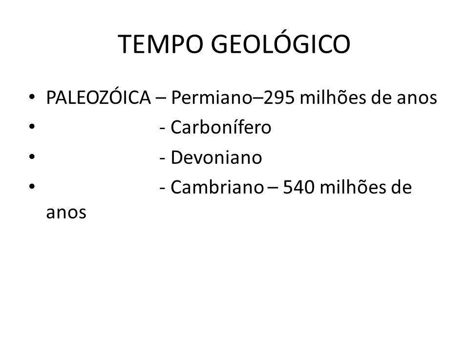 TEMPO GEOLÓGICO PALEOZÓICA – Permiano–295 milhões de anos