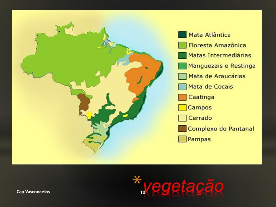 vegetação Cap Vasconcelos