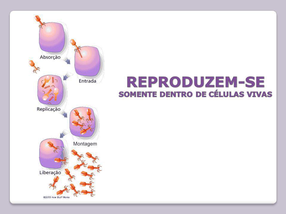 REPRODUZEM-SE SOMENTE DENTRO DE CÉLULAS VIVAS