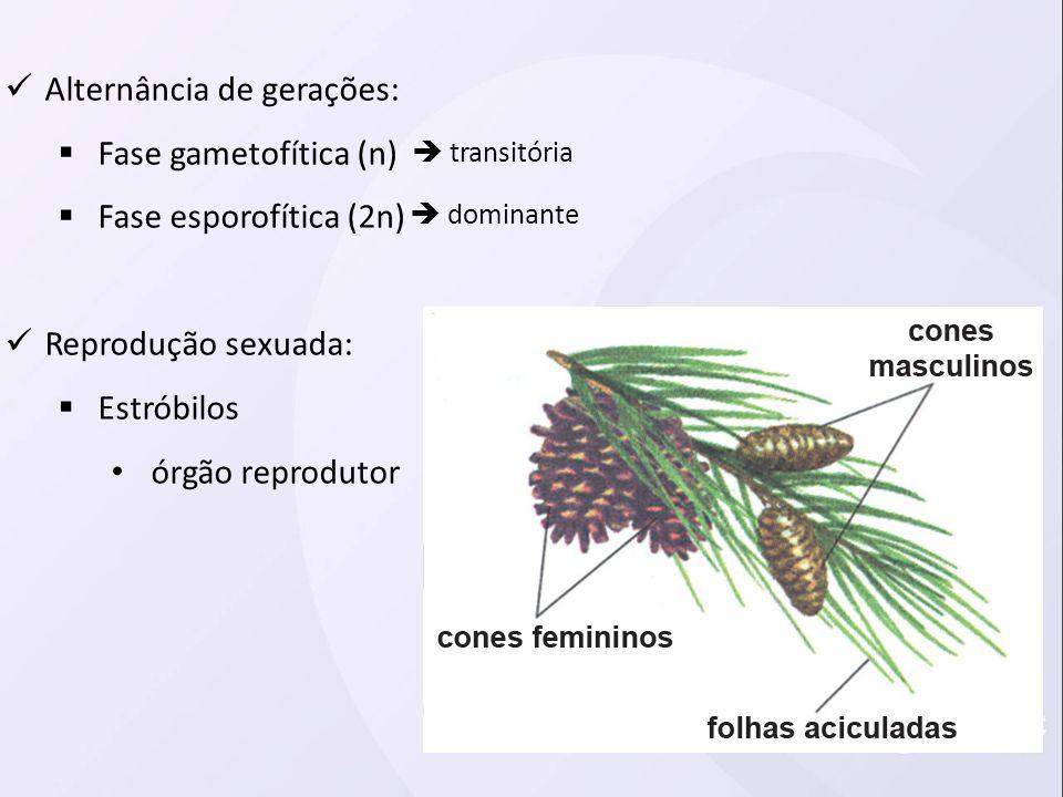 Alternância de gerações: Fase gametofítica (n) Fase esporofítica (2n)