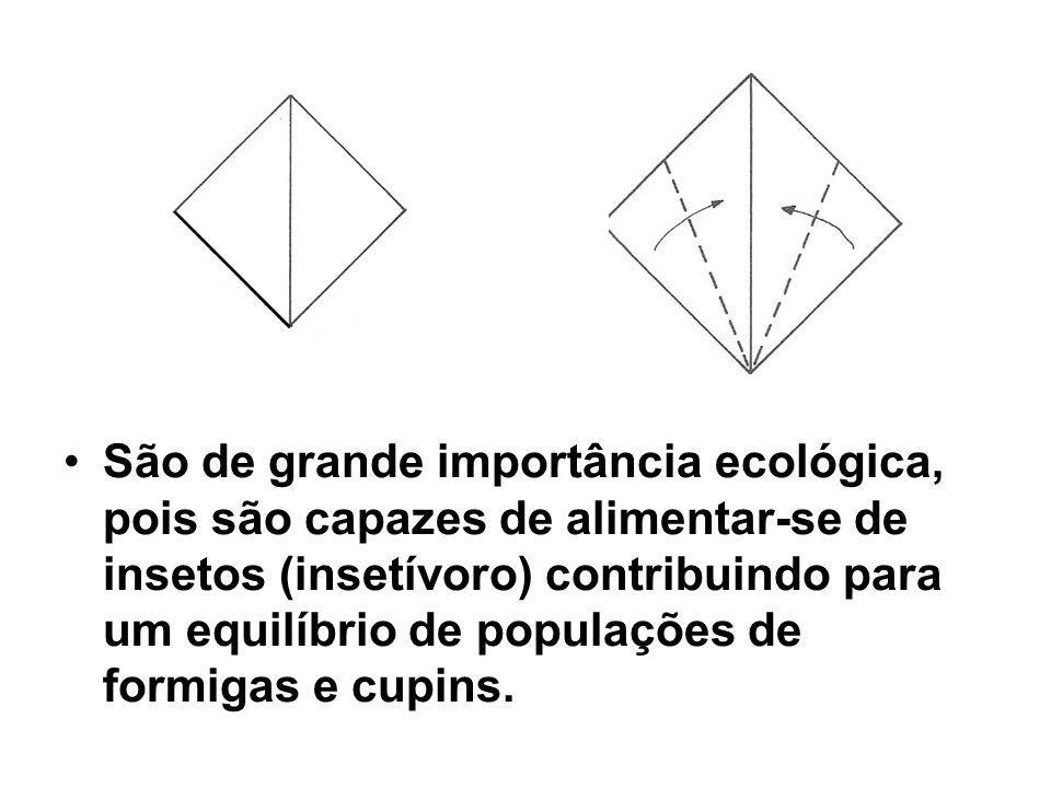 São de grande importância ecológica, pois são capazes de alimentar-se de insetos (insetívoro) contribuindo para um equilíbrio de populações de formigas e cupins.