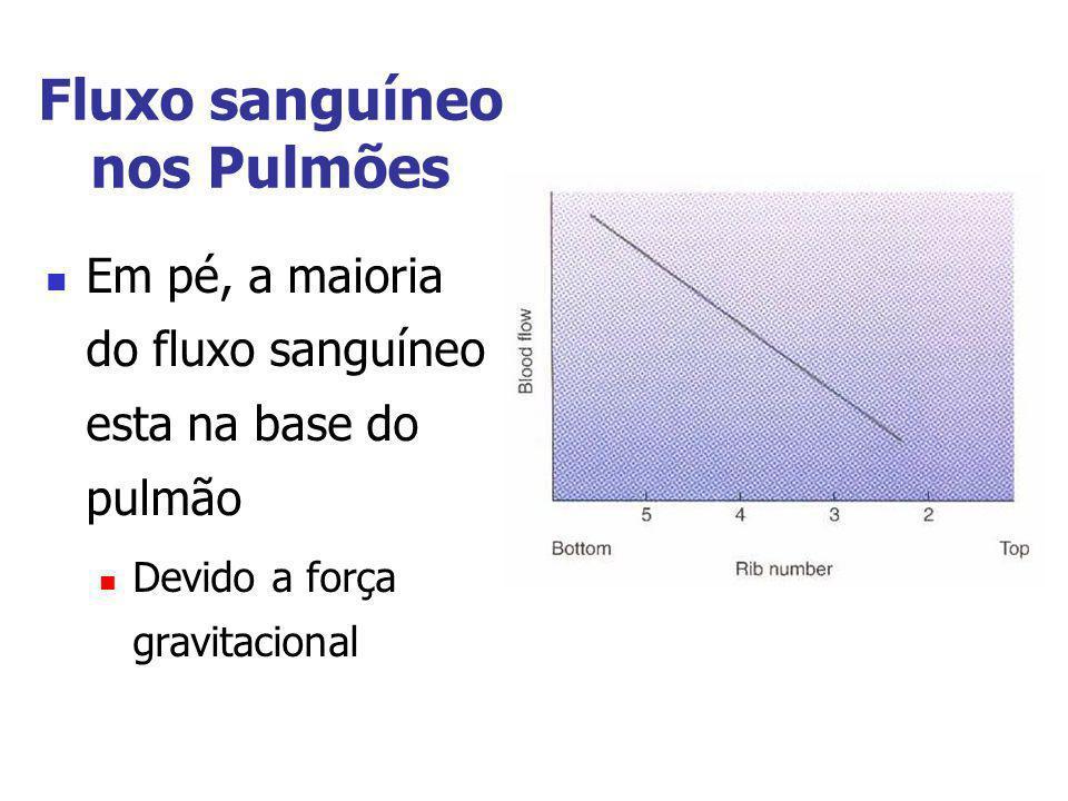 Fluxo sanguíneo nos Pulmões