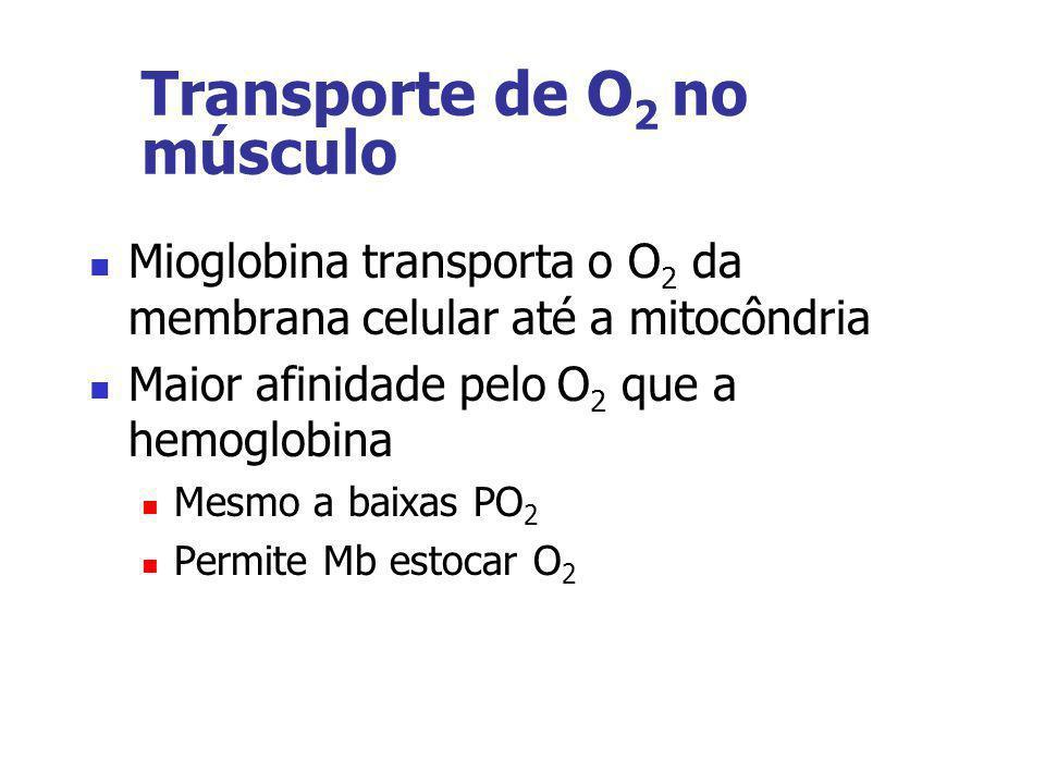 Transporte de O2 no músculo
