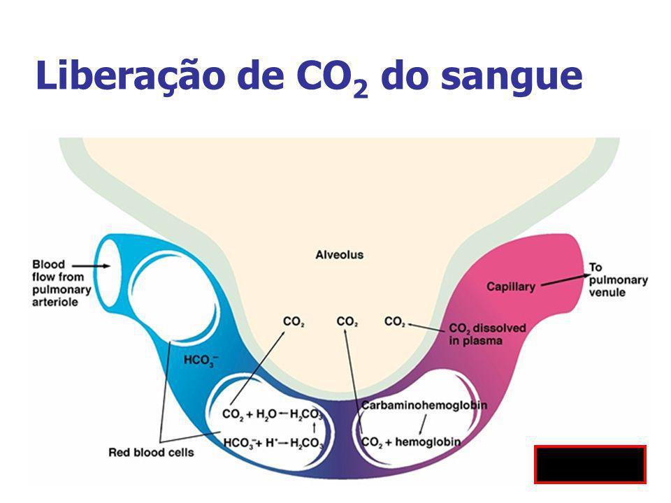 Liberação de CO2 do sangue