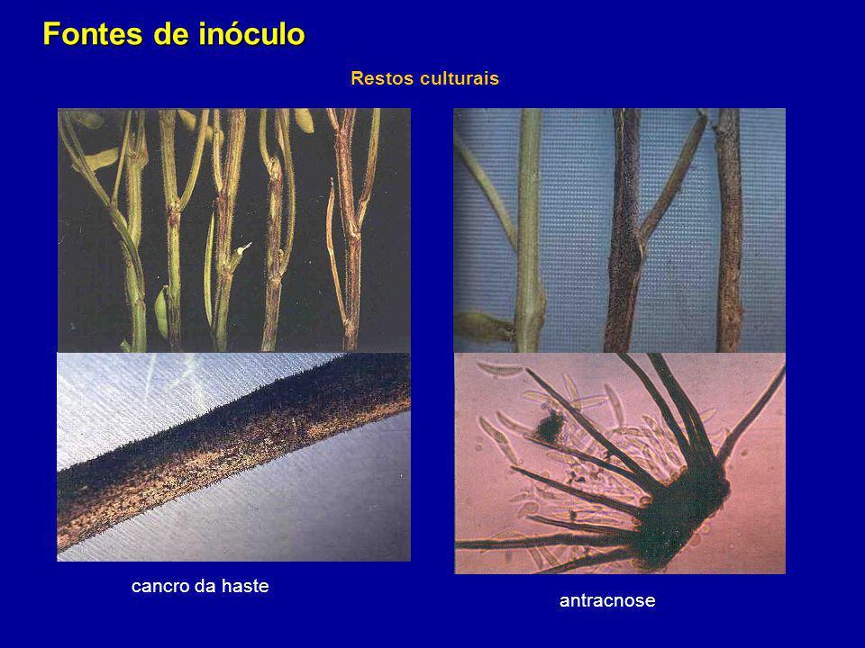Fontes de inóculo Restos culturais cancro da haste antracnose