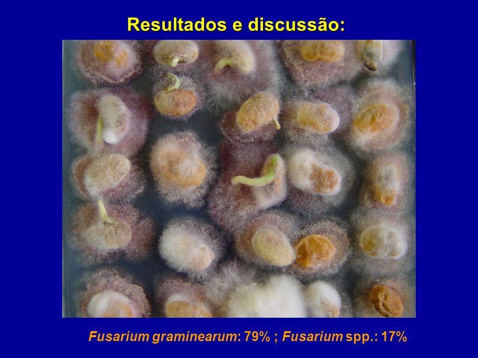 Resultados e discussão: Fusarium graminearum: 79% ; Fusarium spp.: 17%