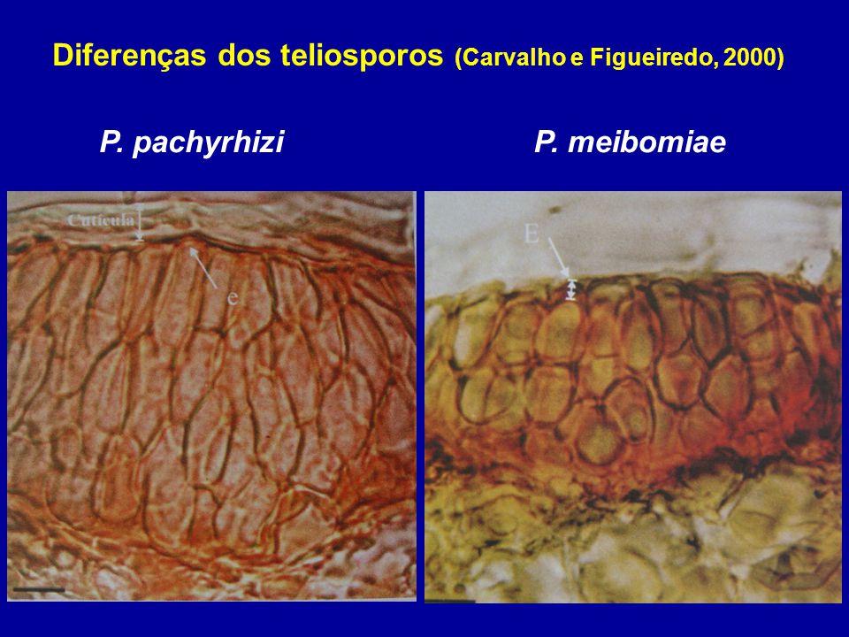 Diferenças dos teliosporos (Carvalho e Figueiredo, 2000)