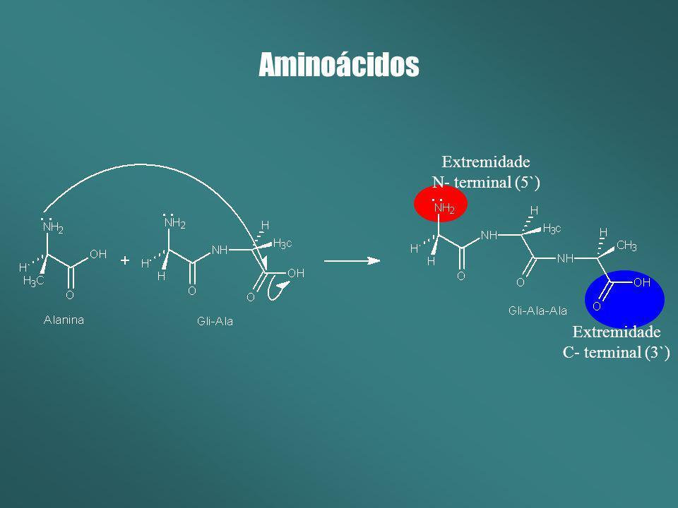 Aminoácidos Extremidade N- terminal (5`) Extremidade C- terminal (3`)