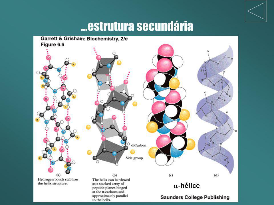 ...estrutura secundária a-hélice