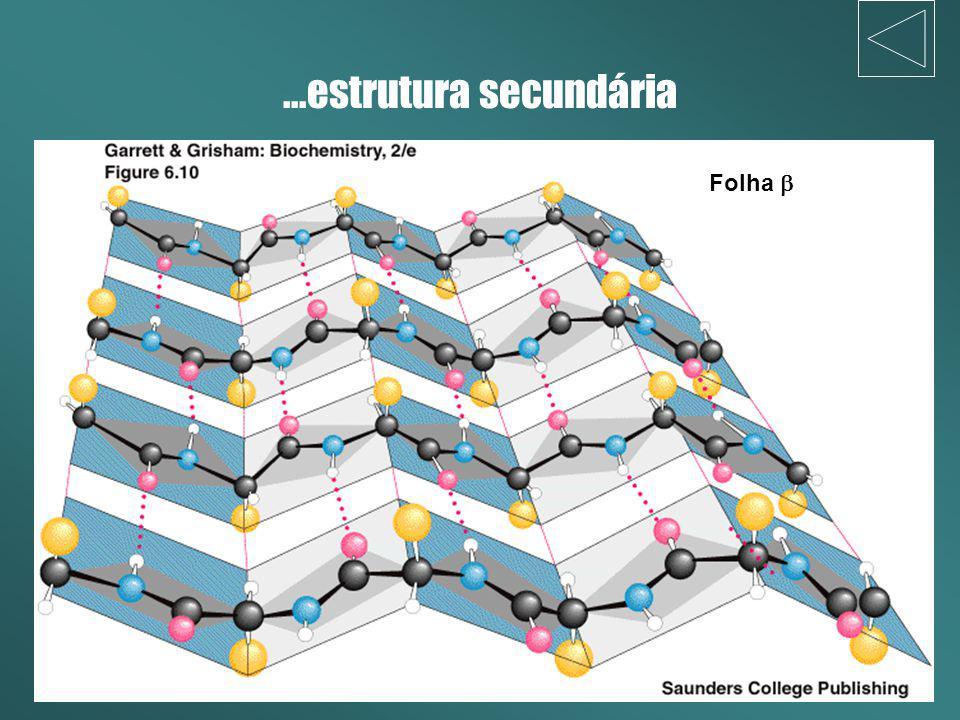 ...estrutura secundária Folha b