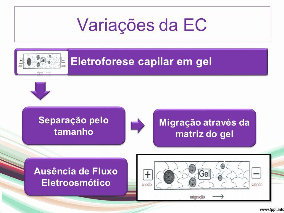 Variações da EC Eletroforese capilar em gel Separação pelo tamanho