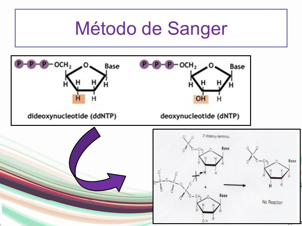 Método de Sanger -Não encontra extremidade OH livre e pára a reação, não consegue incorporar proximo nucleotideo.