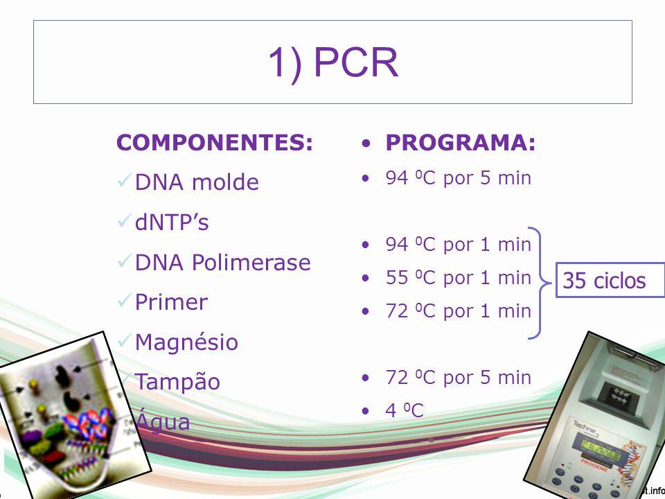 1) PCR COMPONENTES: DNA molde dNTP's DNA Polimerase Primer Magnésio