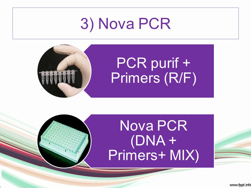 3) Nova PCR Mix: dDNTP´s, agua, polimerase, tampao, Mg