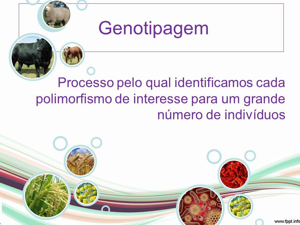 Genotipagem Processo pelo qual identificamos cada polimorfismo de interesse para um grande número de indivíduos.