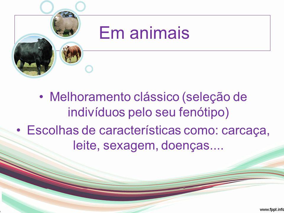 Em animais Melhoramento clássico (seleção de indivíduos pelo seu fenótipo) Escolhas de características como: carcaça, leite, sexagem, doenças....