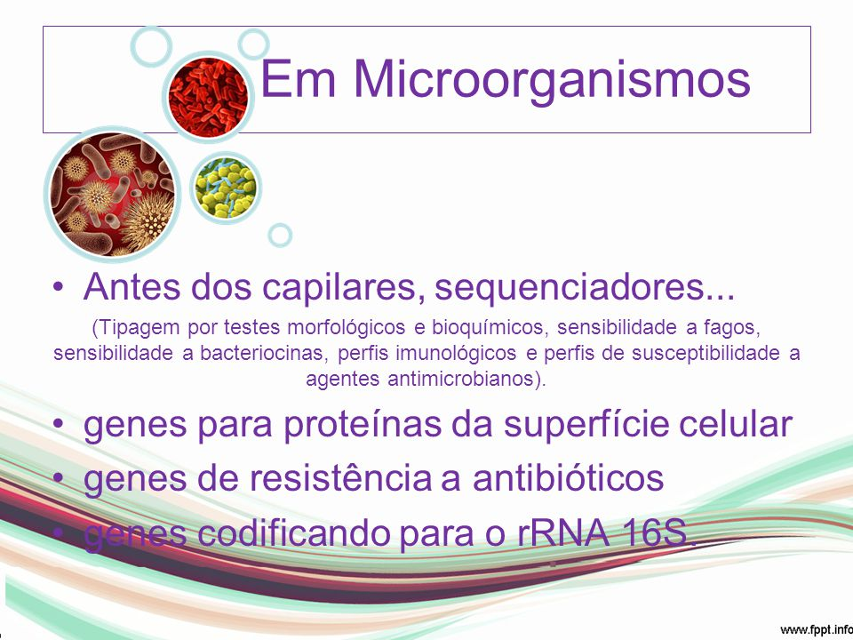Em Microorganismos Antes dos capilares, sequenciadores...