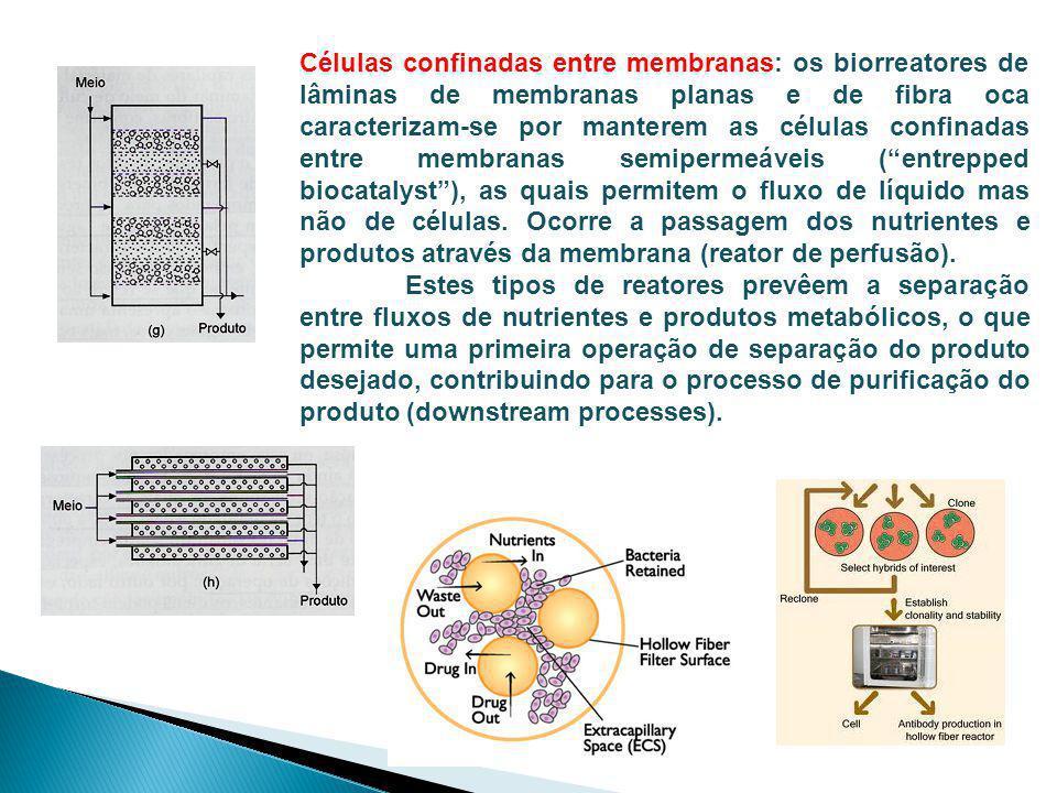 Células confinadas entre membranas: os biorreatores de lâminas de membranas planas e de fibra oca caracterizam-se por manterem as células confinadas entre membranas semipermeáveis ( entrepped biocatalyst ), as quais permitem o fluxo de líquido mas não de células. Ocorre a passagem dos nutrientes e produtos através da membrana (reator de perfusão).