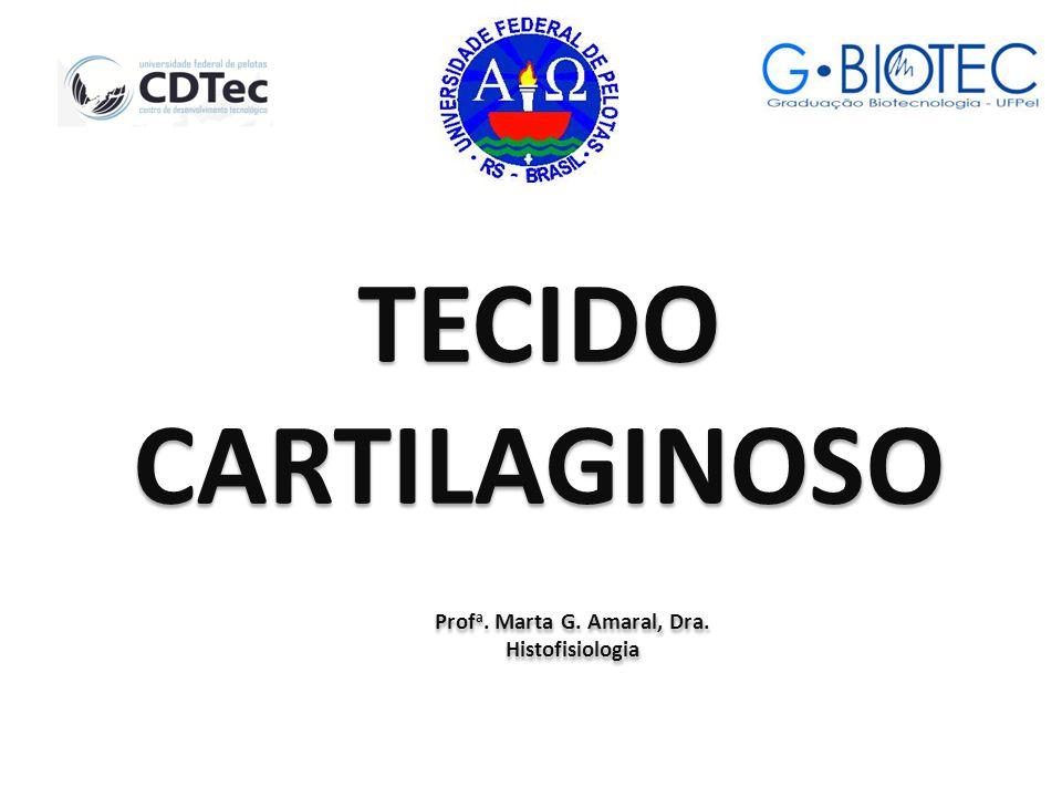 Profa. Marta G. Amaral, Dra.