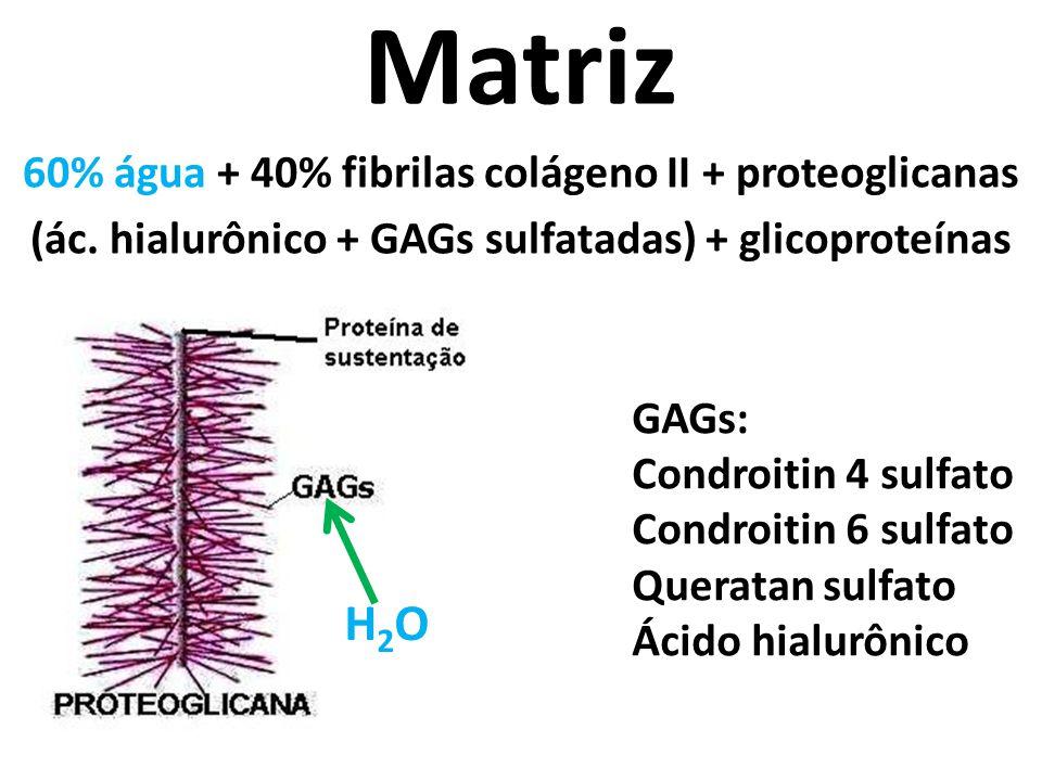 Matriz 60% água + 40% fibrilas colágeno II + proteoglicanas (ác. hialurônico + GAGs sulfatadas) + glicoproteínas