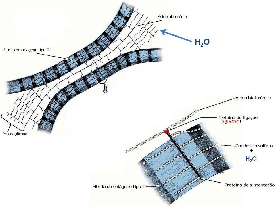 H2O (agrecan) + H2O