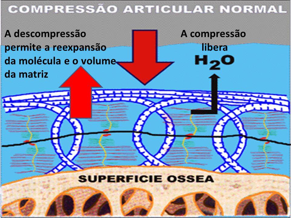 A descompressão permite a reexpansão da molécula e o volume da matriz A compressão libera