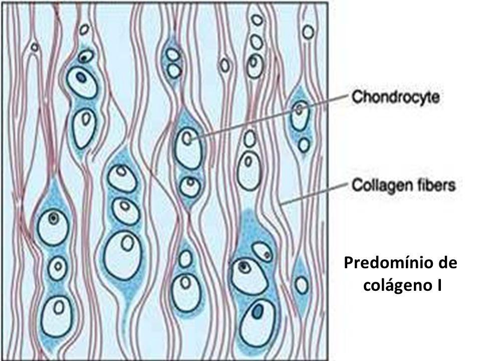 Predomínio de colágeno I
