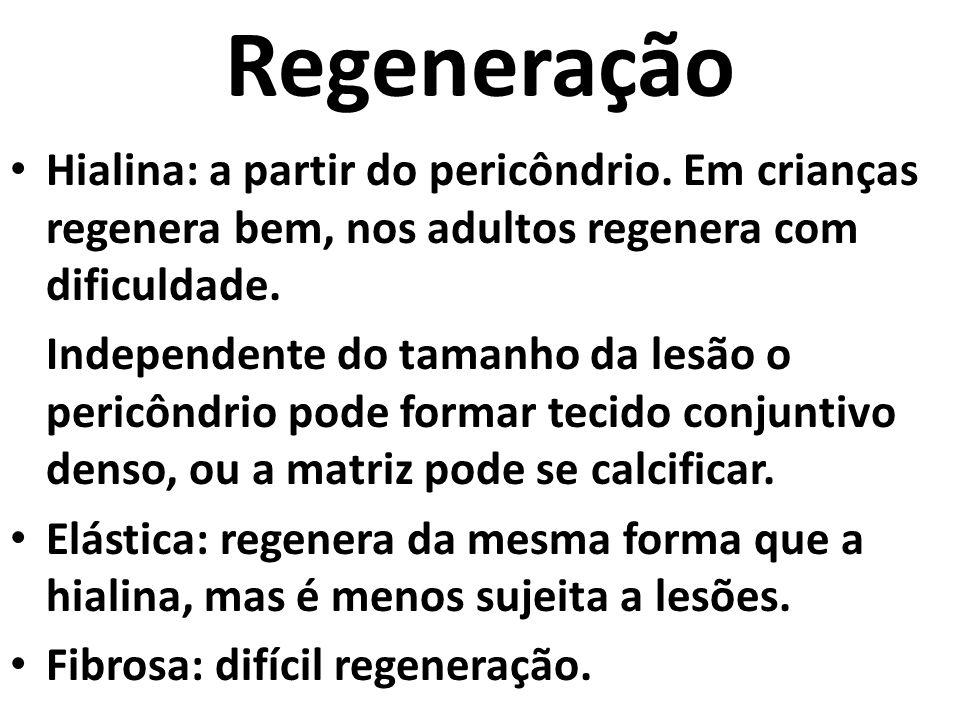 Regeneração Hialina: a partir do pericôndrio. Em crianças regenera bem, nos adultos regenera com dificuldade.