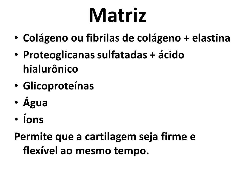 Matriz Colágeno ou fibrilas de colágeno + elastina