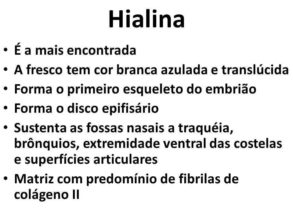 Hialina É a mais encontrada