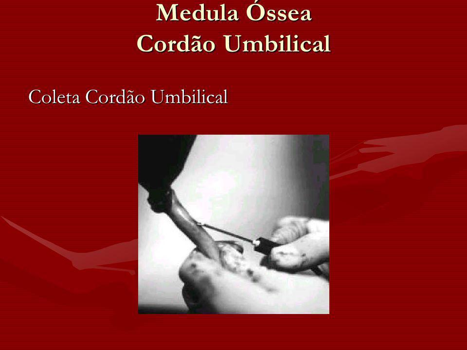 Medula Óssea Cordão Umbilical