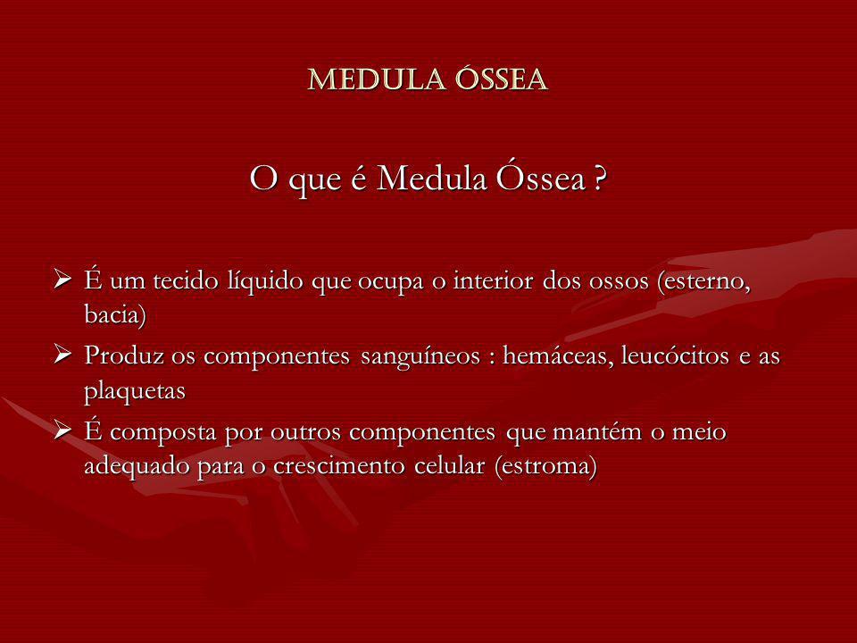 O que é Medula Óssea Medula Óssea