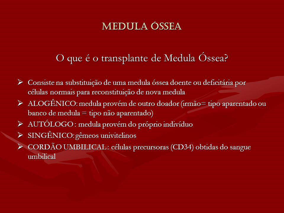 O que é o transplante de Medula Óssea