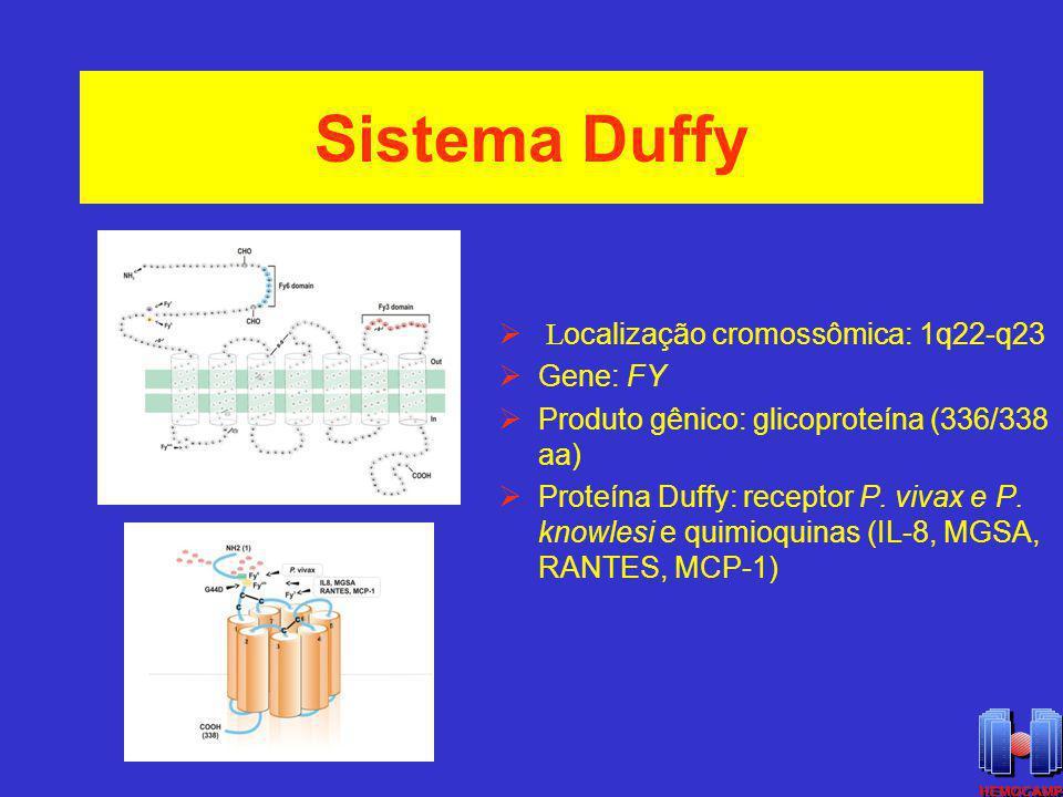 Sistema Duffy Localização cromossômica: 1q22-q23 Gene: FY